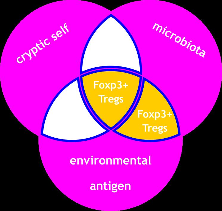 Tregeutix Spiral